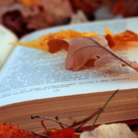 Generica libri foglie autunno